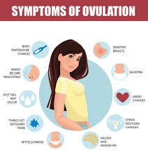 Signs And Symptoms Of Ovulation