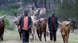 Fulani threatens war if they are sent away from the forest