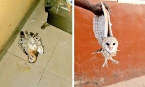 Twitter users narrates how his mother casted out demons from an owl