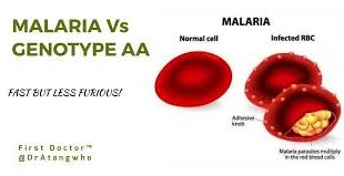 know about Genotype AA